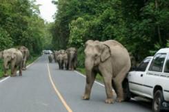 การเอาตัวรอดยามคับขัน เมื่อเจออุบัติเหตุทางรถยนต์ ตอนที่ 10 : สัตว์ขวางทาง